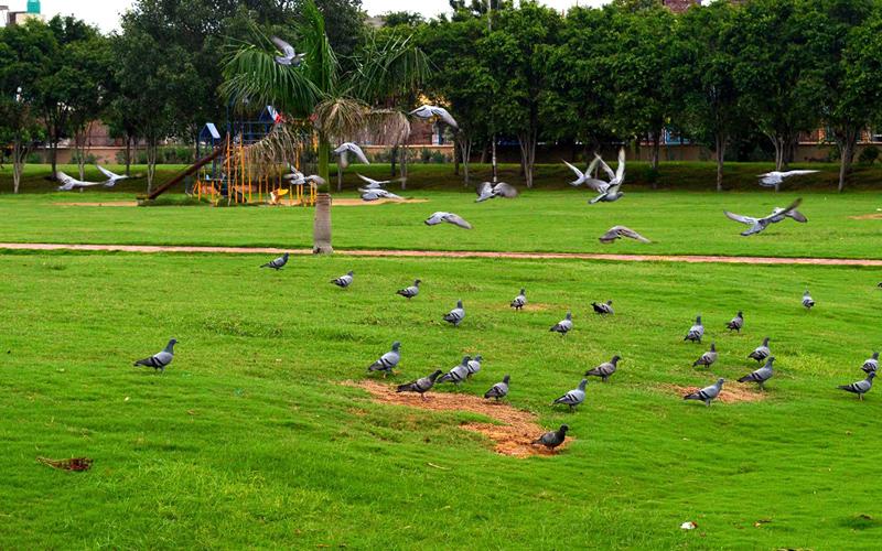 O P-jindal-park-india