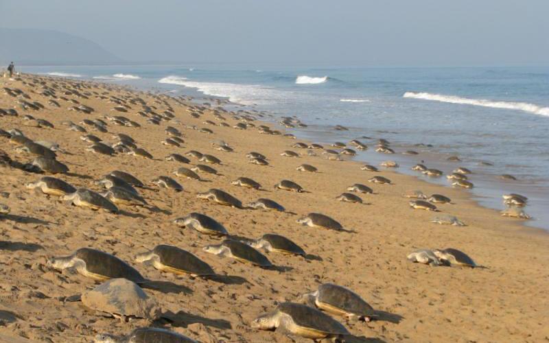 Aryapalli Beach-india