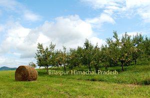 bilaspur-himachal -pradesh-india