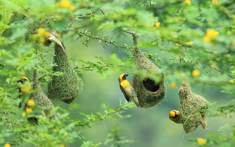 nature-wildlife in-bidar-india