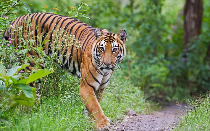 pipli-zoo-kurukshetra-india