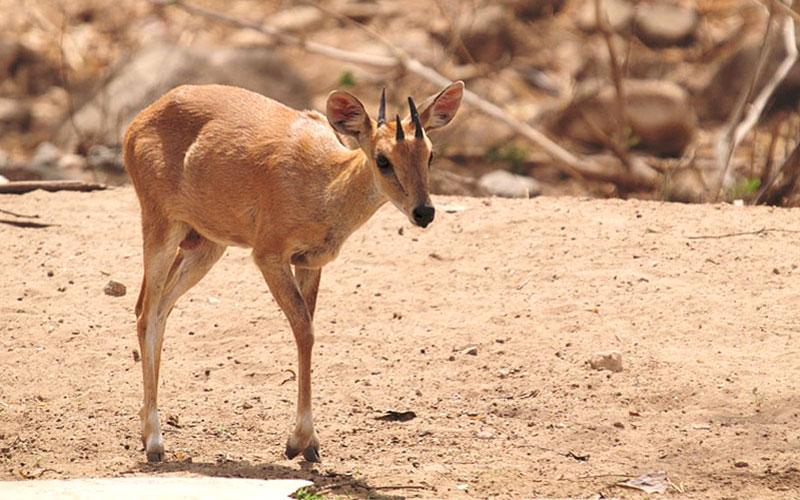 rajmachi-wildlife-sanctuary-rajmachi