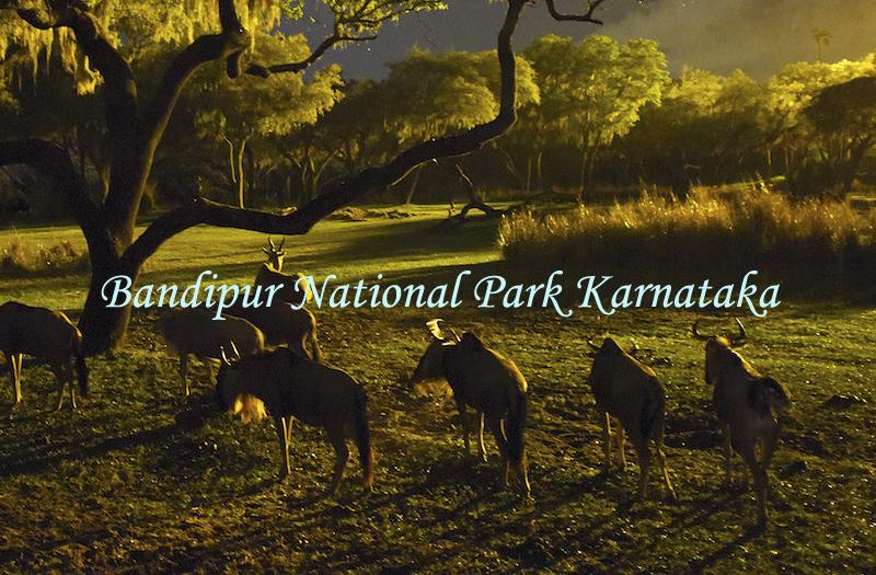 bandipur-national-park-karnataka-india