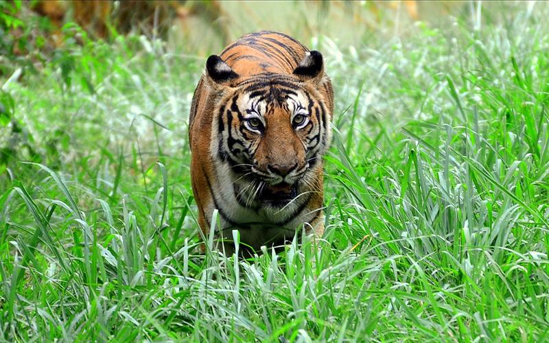 binkadakatti-zoo-india