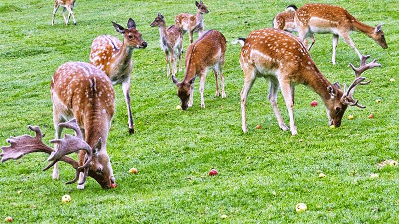 kanchula-korak-musk-deer-sanctuary
