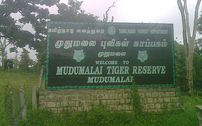 mudumalai-wildlife-sanctuary-india