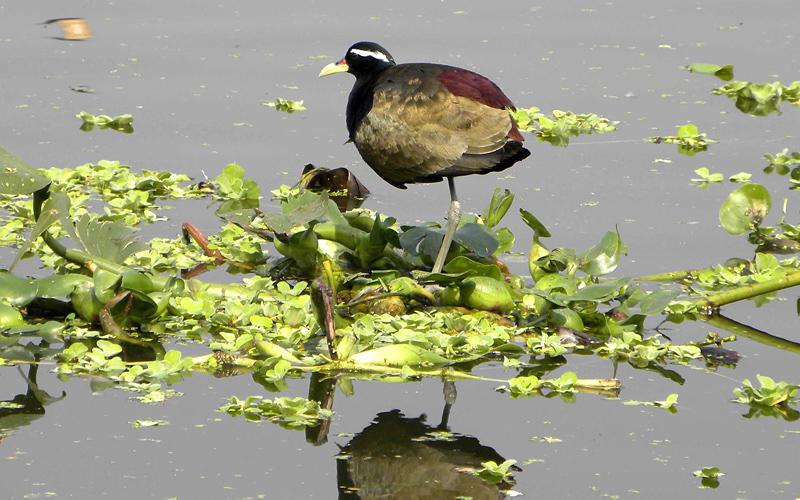 bura-chapori-wildlife-sanctuary-india