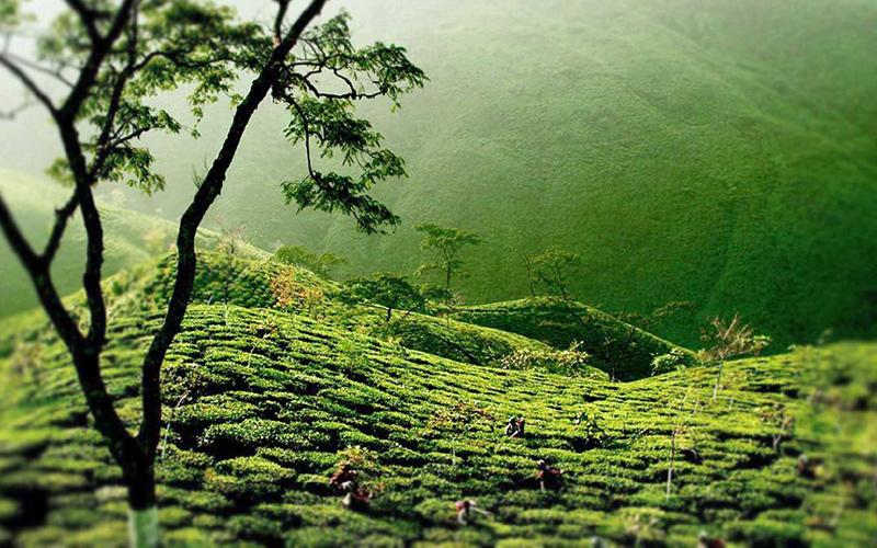 dudhia-talao-greens-india