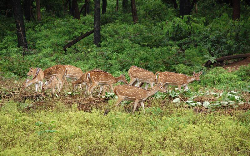 kinnerasani-wildlife-sanctuary-india