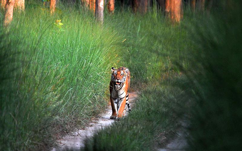 namdapha-national-park-india