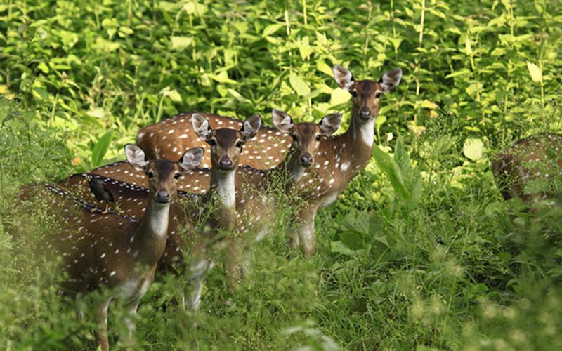 shenduruny-wildlife-sanctuary-india