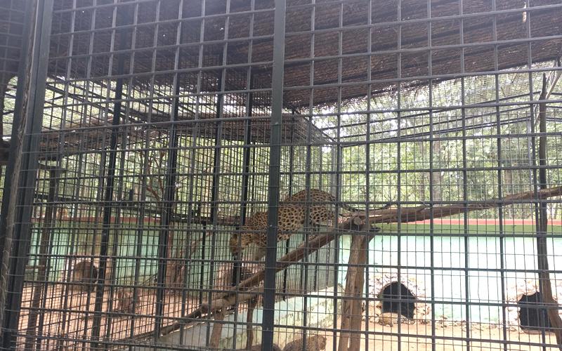 thyvare-koppa-lion-&-tiger-reserve-india