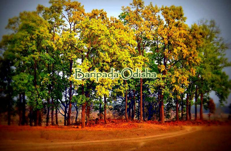 baripada-odisha-india