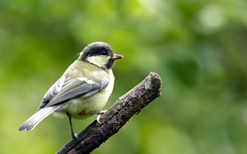 eaglenest-wildlife-sanctuary-india
