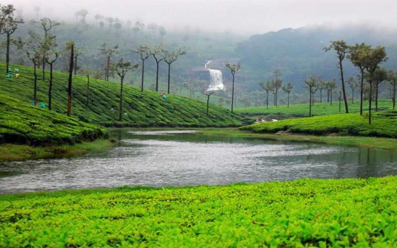 grass-hills-lies-india