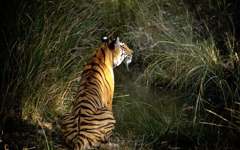palak-wildlife-sanctuary-india