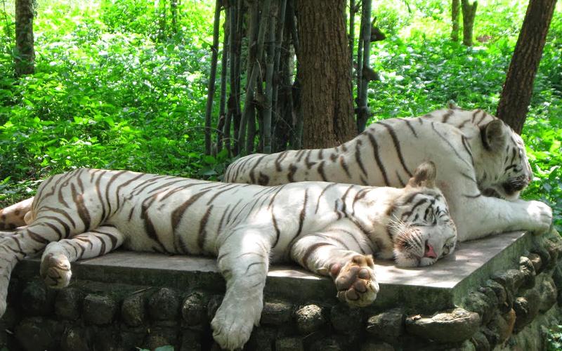 shimlipal-national-park-baripada-india