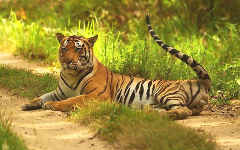 balukhand-konark-wildlife-sanctuary-india