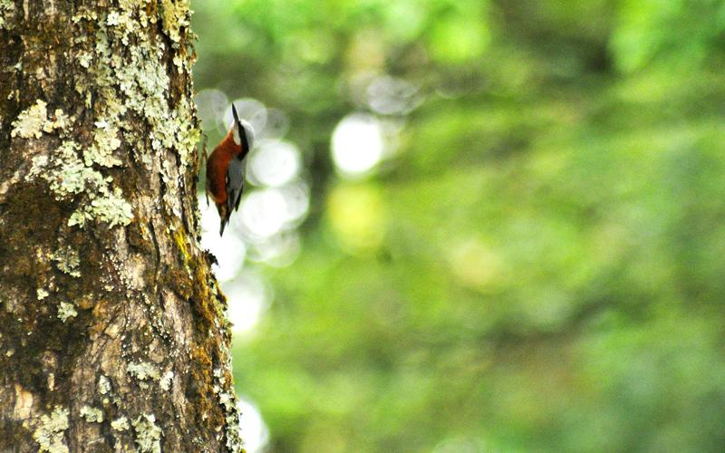 birding-&-trekking-bhimtal-india