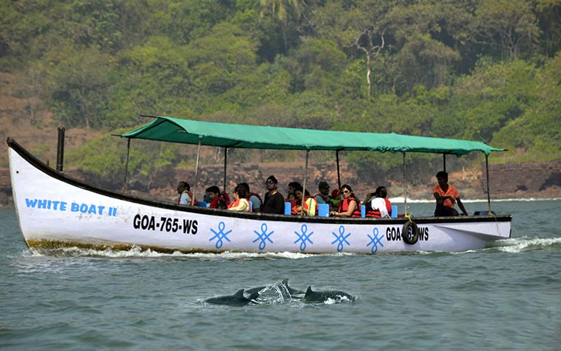 dolphin-boat-trip-india