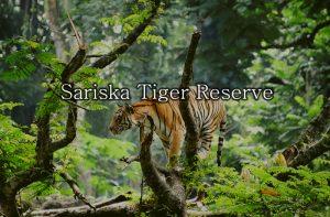 sariska-tiger-reserve-india