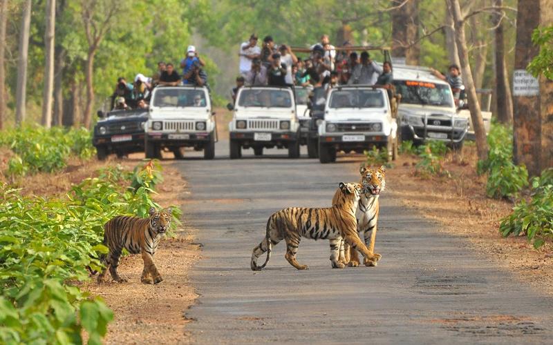 sitamata-wildlife-sanctuary-india