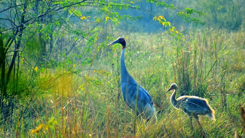 bharatpur-sanctuary-india