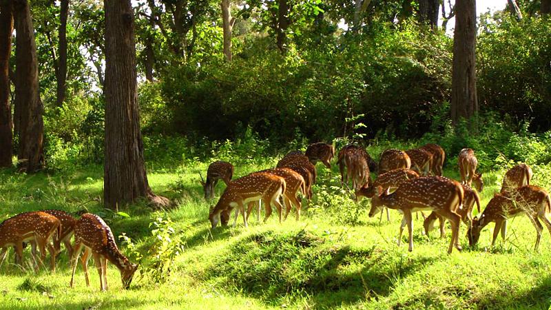 deer-park-near-shantiniketan-india