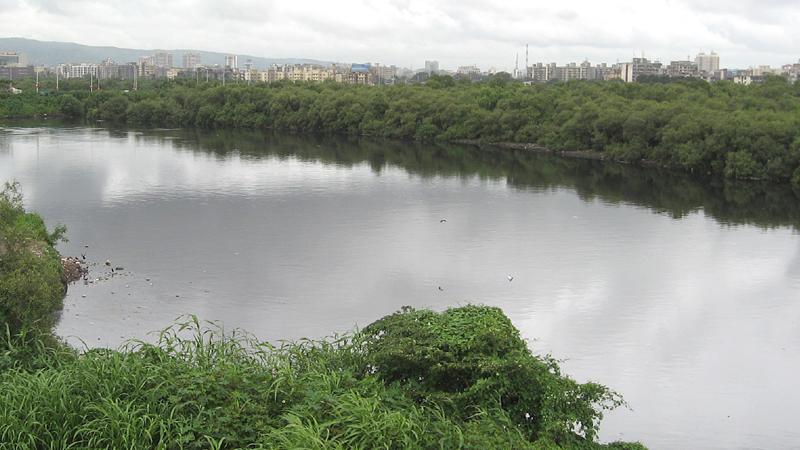 flora-and-fauna-chandoli-india