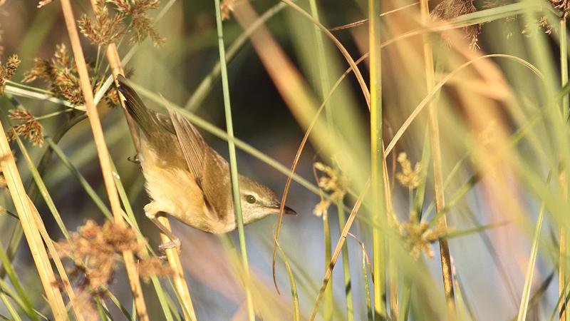 jatinga-bird-watching-center-india