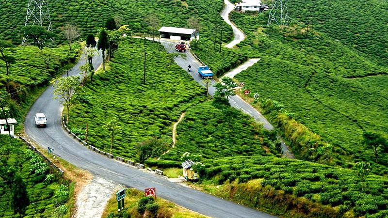 tea-garden-india