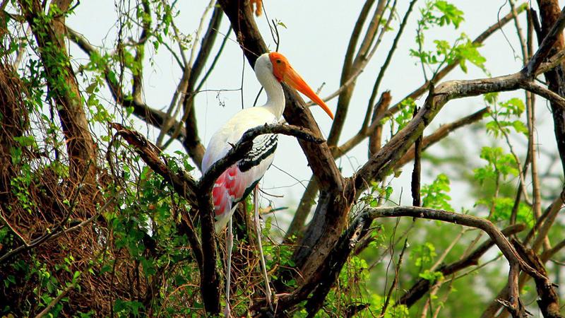 vedantangal-bird-sanctuary