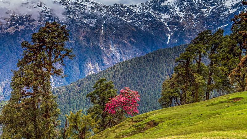 Deoriatal-Chandrashila-Peak-trek