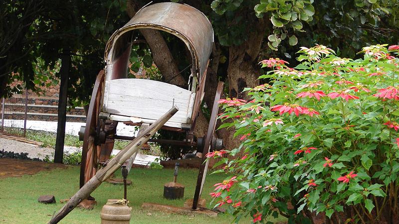 bullock-cart-india