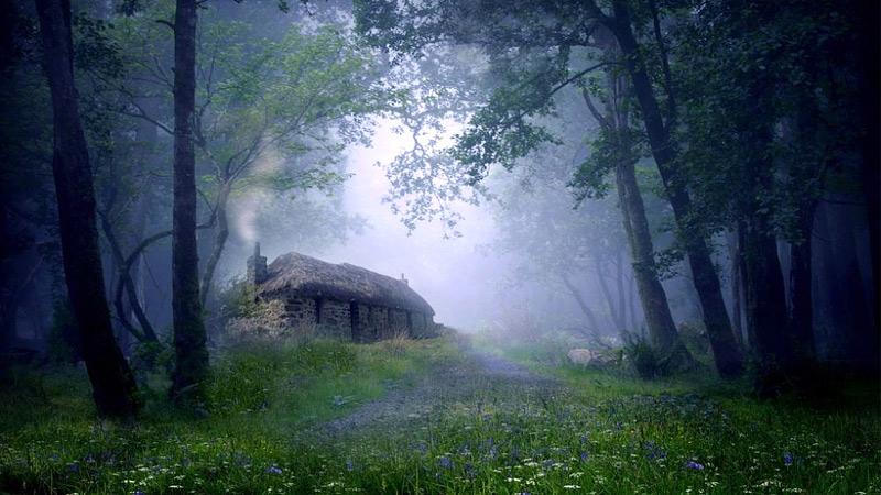 deodar-forest