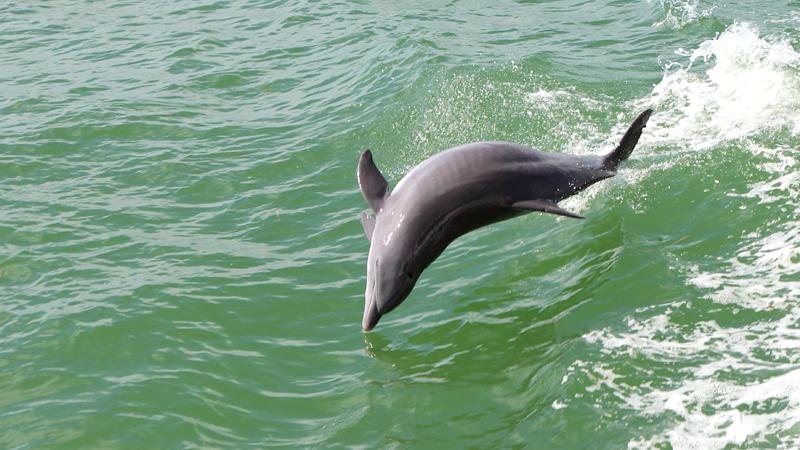 dolphin-point-at-satapada-india