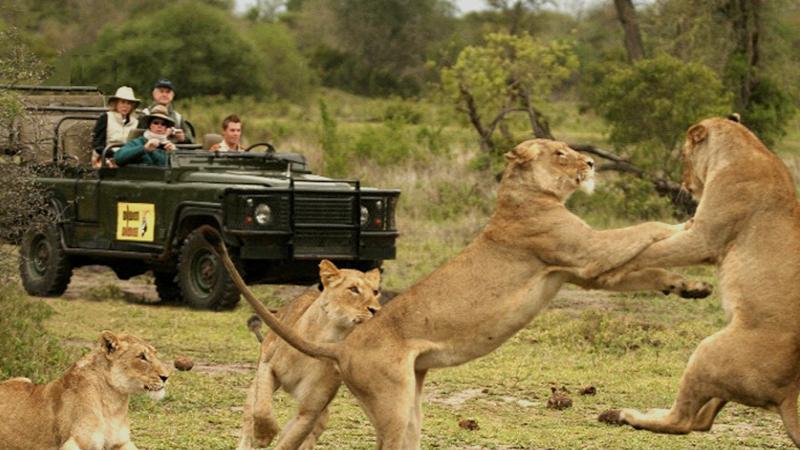 lion-safari-wildlife-park-silvassa-india