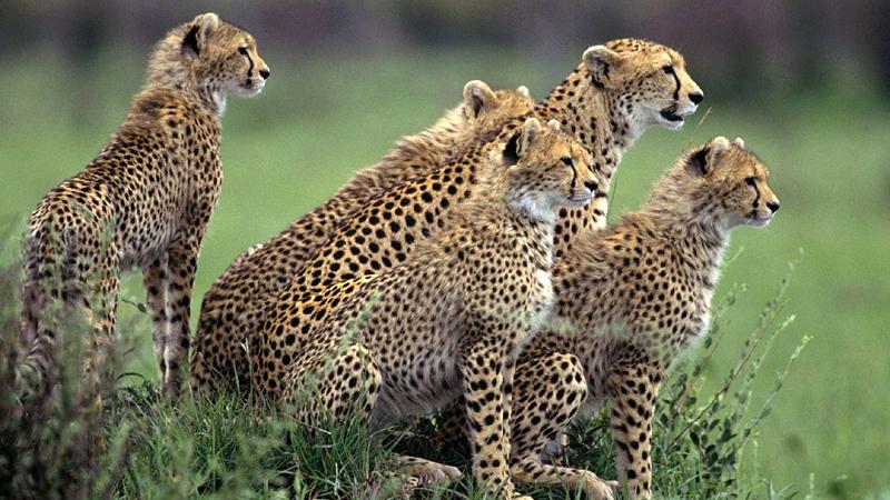 wildlife-sanctuaries-near-island-india