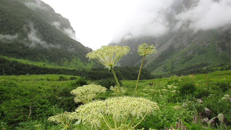 valley-of-flowers-valley-of-flowers-national-park-uttarakhand