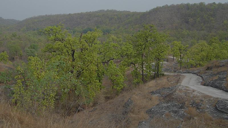 climber's-point-Bandhavgarh