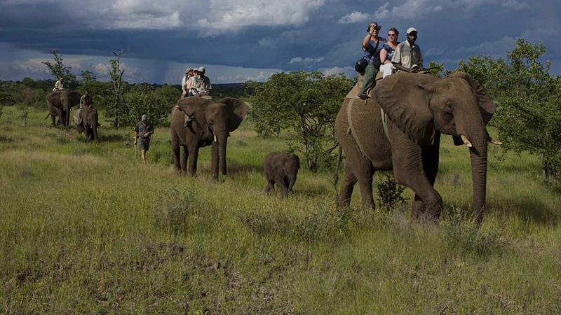 elephant-safari-bandhavgarh-india