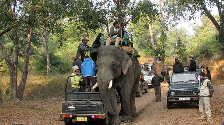 elephants-bandhavgarh
