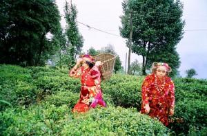 Darjeeling-6652_10
